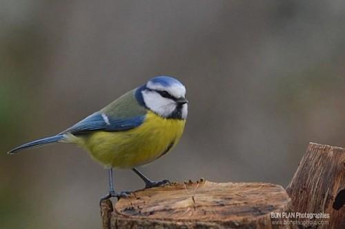 Astuce : photographier les oiseaux dans son jardin