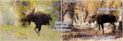 PL-Wildlife-Tips-Part-1-Photo-04-Robert-Andersen