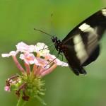 Astuce : photographier le printemps, 9 conseils utiles