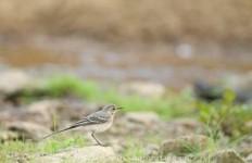 astuce-photo-oiseaux-bord-riviere