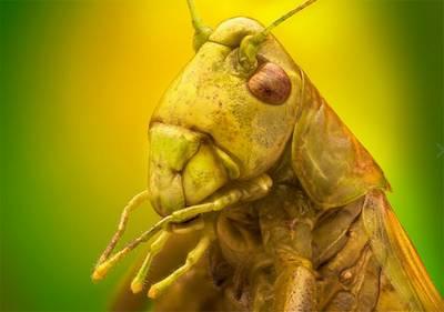 portraits-insectes