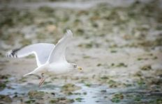technique-photographier-oiseaux-en-vol