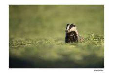regler-son-reflex-photo-animaliere