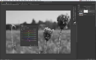 Formation Photoshop Noir et Blanc