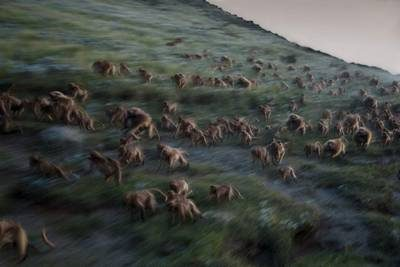 meilleures photos 2017 du National Geographic