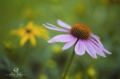 astuces photographie de fleurs