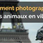 Astuce : comment photographier les animaux en ville