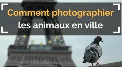 photographier les animaux en ville