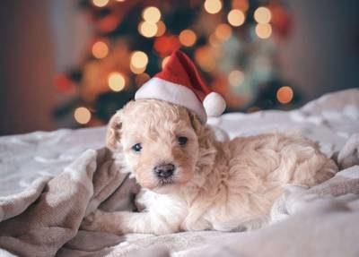 réussir photos à Noël